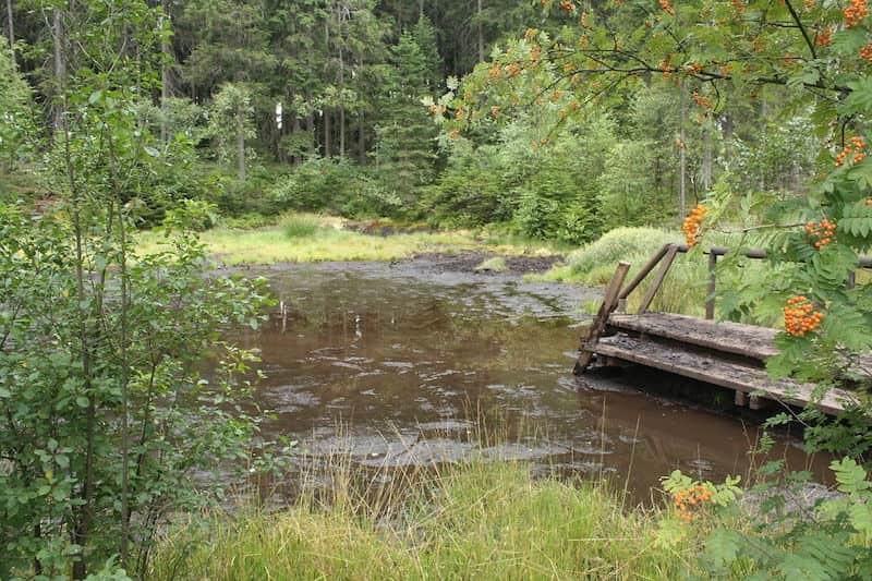 Moore in Deutschland, naturmoorbad und mehr